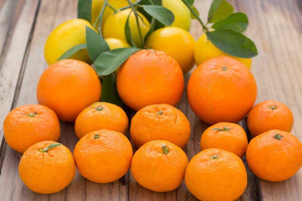 Beautiful Winter Citrus: Tangerines, Orange and Lemons on a board