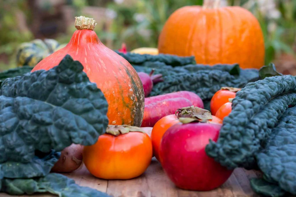 """Fall Farmers Market Finds: Kale framing red """"wine"""" apple, persimmons, purple carrots, red kuri squash, and a pumpkin"""